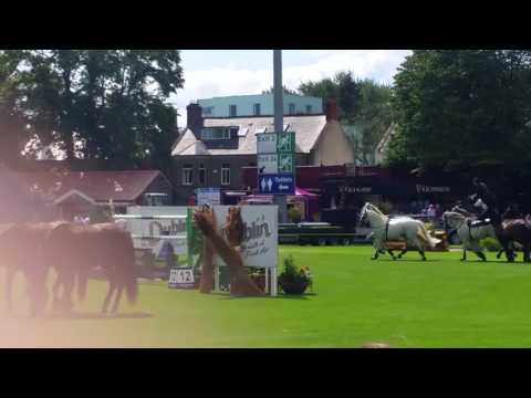 Dublin  horse show 2017