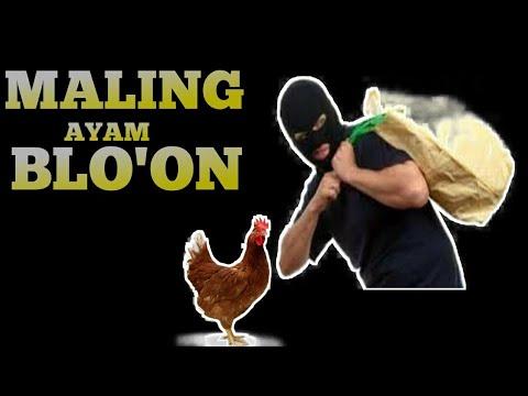 Download 57 Koleksi Gambar Lucu Maling Ayam Terlucu