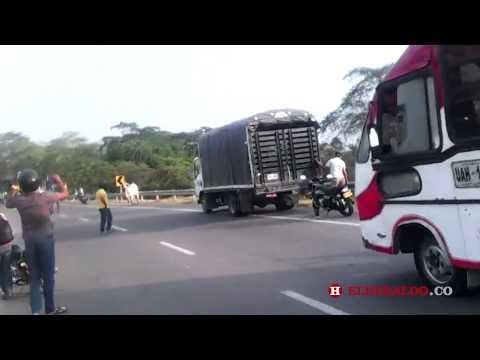 Un toro paralizó tráfico entre Turbaco y Cartagena