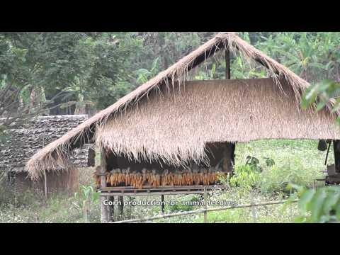 DHAMMA RAKSA, THAILAND, A day at the Pure Farm (ENG)