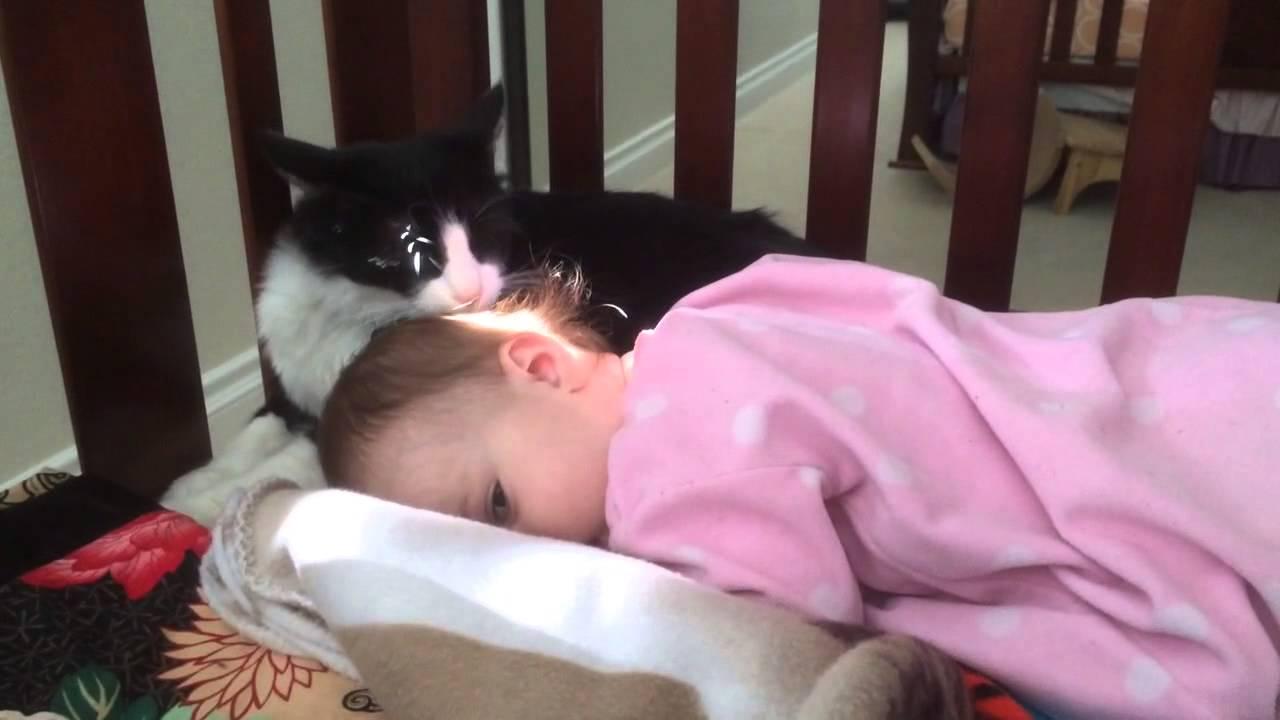 Cats Lick Human Hair