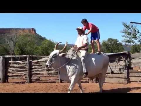 Клип Ox - Ride!!