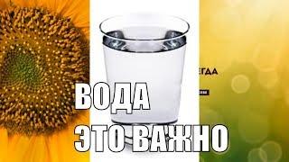 Зачем нужно выпивать стакан воды перед сном