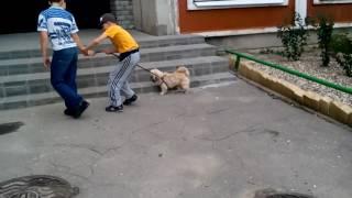 Дала другу погулять с собакой/мою собаку украли?