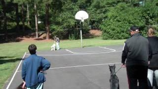 Dog Training Classes Near Durham Nc. Dog Training Near Greensboro Nc