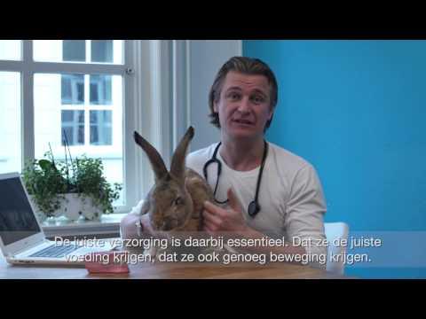 Wordt jouw konijn ook 10? Dierendokter Piet van SBS6 geeft tips