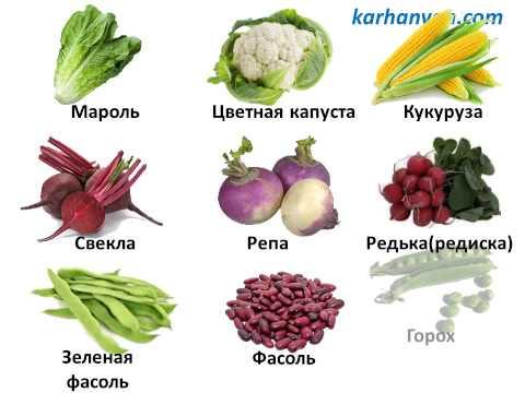 Учим русский язык, Овощи/Սովորում ենք ռուսերեն, Բանջարեղեն