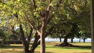 Birding at Waimea Plantation Cottages Kauai