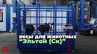 Весы для животных Эльтон (Ск) электронные