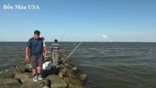 Ở Mỹ, Cá Thiên Nhiên Nghẹt cả Biển