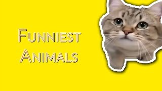 FUNNIEST ANIMALS OF THE INTERNET!! | TRY NOT TO LAUGH ANIMAL EDITION