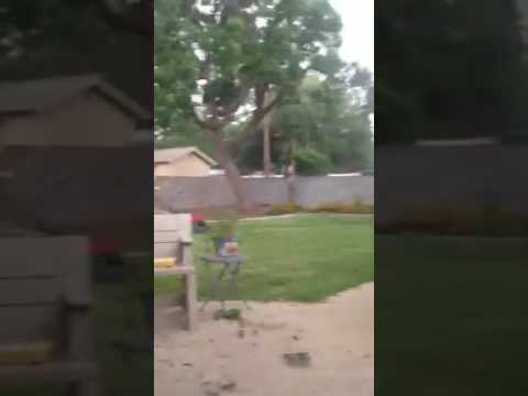 Storm Uproots Tree in Odessa, Texas
