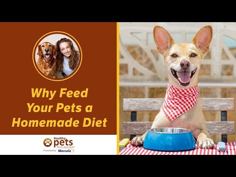 Why Feed Your Pets A Homemade Diet