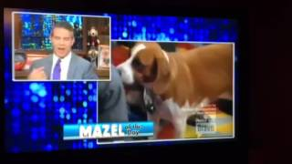 WWHL:  Andy's Rescue Dog Wacha