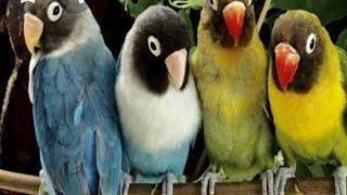 عالم العصافير