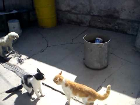 GRAN PELEA DE GATOS - YouTube