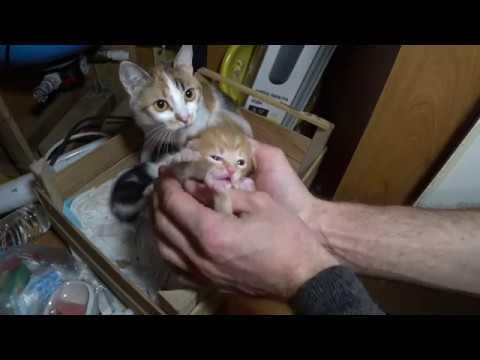 Как отличить кошку от кота в 2 месяца