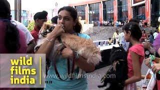 Mass Dogs Gathering At Ansal Plaza In Delhi