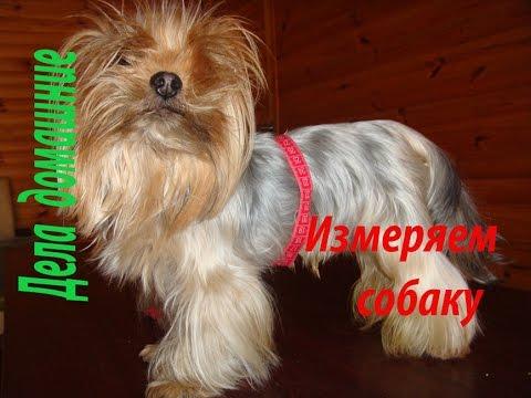 Как обмерить собаку для комбинезона
