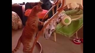 Заботливый кот