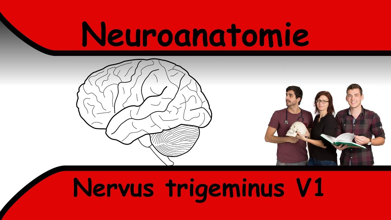 Nervus Trigeminus V1 - YouTube