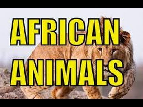 African Animals: See The Lions, Elephants and Giraffes in The Wild Africa.
