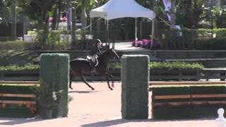 Video of ALCAMIL Z ridden by CHEYENNE SICKLE from ShowNet!