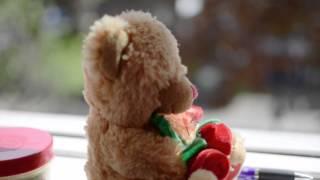 sarah s teddy test video nikon d5300 nikkor 35mm 1 8g