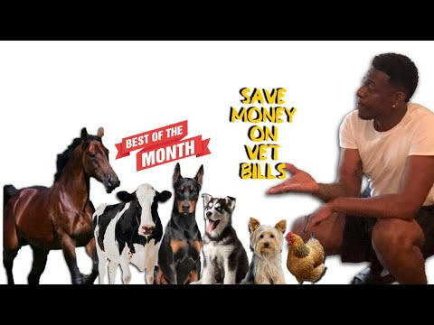 save-money-on-vet-bills-vet-bills-are-too-high