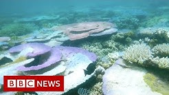 Could the Great Barrier Reef lose its world heritage status - BBC News