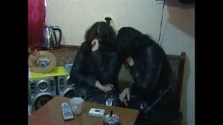 Борьба с проституцией в Новом Уренгое продолжается