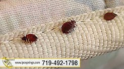 Independent Pest Control | Bed Bugs, Termites, Fleas, Silverfish, Spiders | Colorado Springs, CO