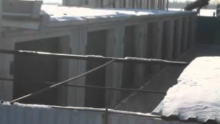 Хабаровский пункт временного содержания безнадзорных животных 2