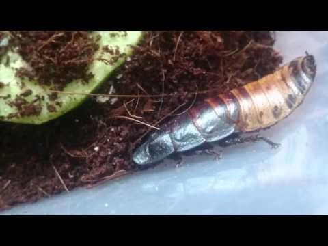 Таракашки и многоножки