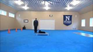 Kodiak (border Collie) Advanced Boot Camp Dog Training Video