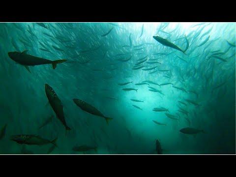 CRAZY Fish Feeding FRENZY