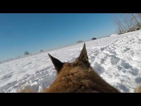 GoPro Hero5 Dog Harness Test Run