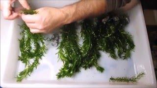 Aquatic Plants Anchors
