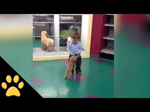 Boy is Adorably Afraid of a Tiny Puppy