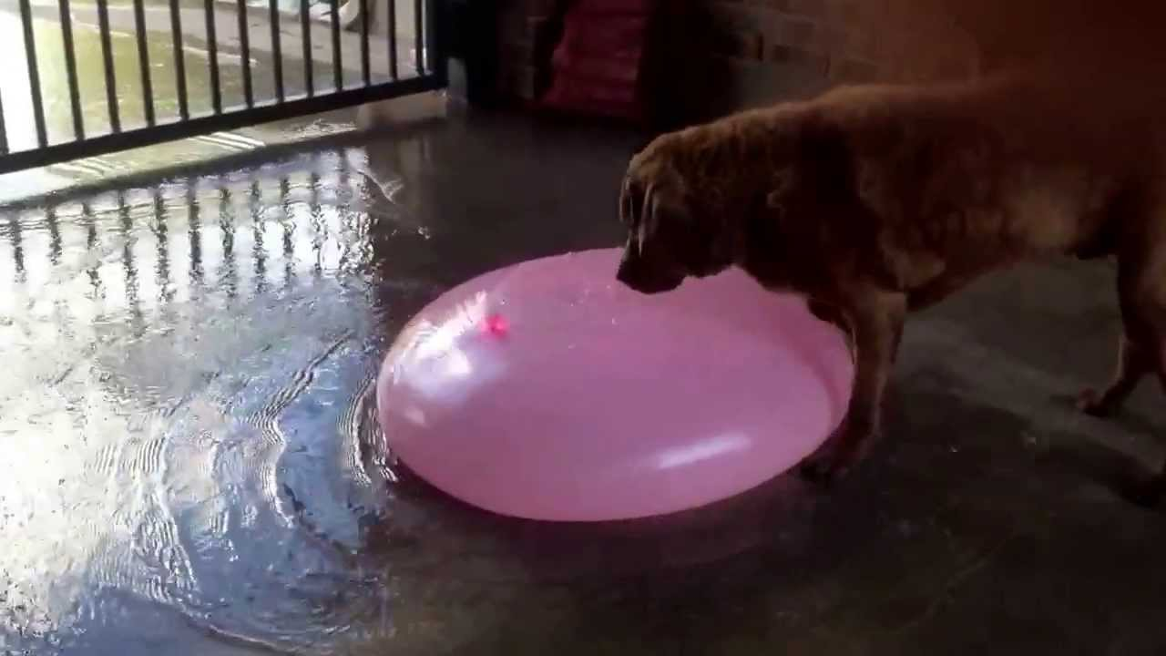 Dog Eats Gum