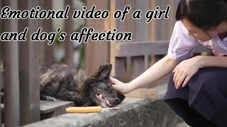 love story of a girl and a dog s affection 1080 p emotional and heart touching it will make u cry