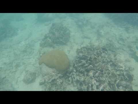 Marine Life - Roatan Bay, Honduras - Tabyana Beach