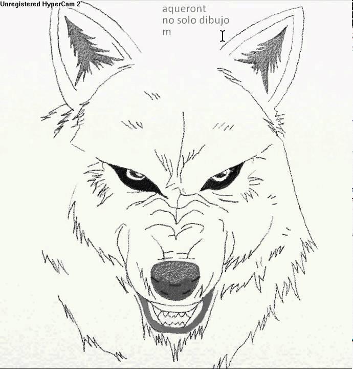dubujando wolf rain lobo art trage  YouTube