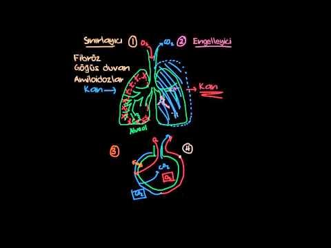 Akciğer Hastalığı Çeşitleri (Solunum Sistemi Hastalıkları)