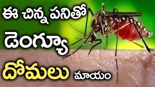 ఈ పనిచేస్తే డెంగ్యు దోమలు రమ్మన్న రావు   || Save Your Life From Dengue Mosquitos