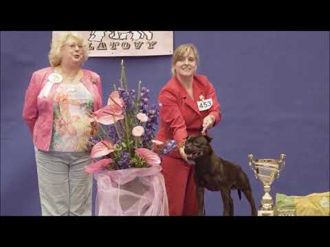 Glimmer Man Domidar Dogs - Best in Group | National Dog Show Klatovy 2017