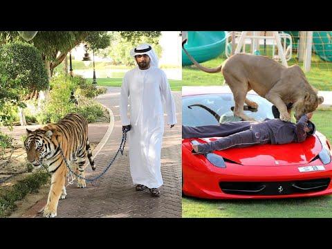 Dubai Prince Lifestyle 2019 | Hamdan bin Mohammed Al Maktoum |