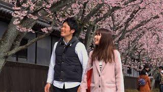 第36回「桜のもとで」