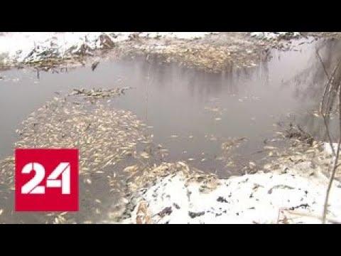 На особо охраняемой природной территории выясняют причины массовой гибели рыбы - Россия 24