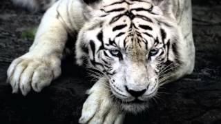 10 нападений животных на людей